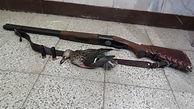دستگیری شکارچیان غیرمجاز در 5 شهر مازندران