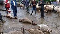 تلف شدن هزاران دام در سیلاب امسال