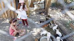کلاس درس کنار لانه خرگوشها در غرب تهران + عکس
