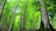 جویندگان قارچ در جنگلهای نوشهر همه را به دردسر انداختند !