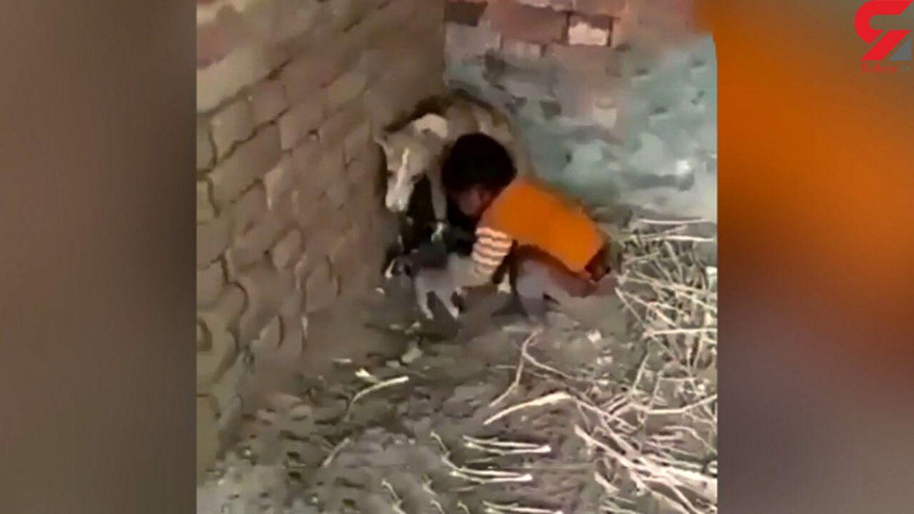 درگیری  سگ مادر با کودک سمج بر سر تولههایش + فیلم