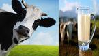 شیوع آلرژی به شیرگاو ۳ تا ۵ درصد در جهان