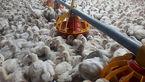 کشف بیش از 7 تن مرغ زنده قاچاق در دره شهر