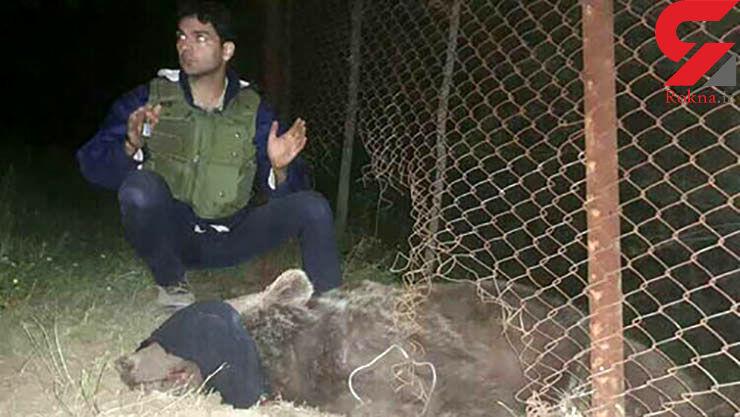 خرس قهوهای 5 ساله از مرگ نجات یافت +تصاویر