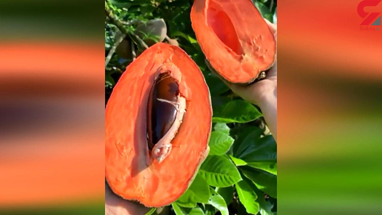 با یک میوه عجیب آشنا شوید + فیلم