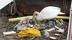قوی زیبا در میان زباله ها +عکس یک تراژدی
