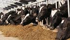 کمبود گوشت هم در راه است؟