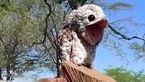 این پرنده به ننه من غریب معروف است + فیلم جالب