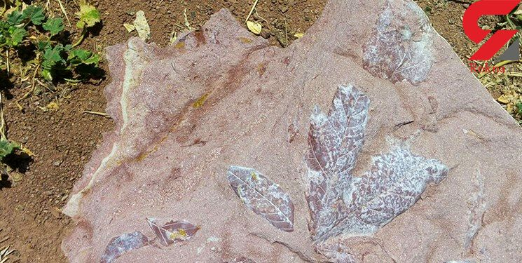 فسیلهای چند میلیون ساله گیاهی در مشگین شهر کشف شد