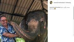 صحنه درگیری حمید فرخنژاد با فیل +عکس