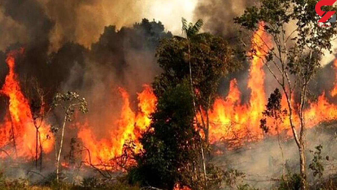 ارتفاعات جنگلی توسکستان دچار حریق شد