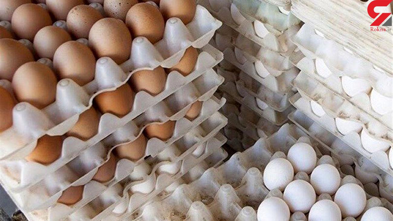 صادرات تخم مرغ ممنوع شد