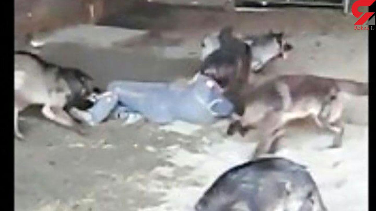 حمله سگ های ولگرد به خبرنگار ایسنا در هشترود / خطر از بیخ گوش مرد جوان گذشت
