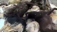کشتار بیرحمانه 20 سگ با تفنگ ساچمهای در اشتهارد + عکس