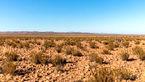 بارش باران بعد از ۵۰۰ سال یک صحرا را نابود کرد!