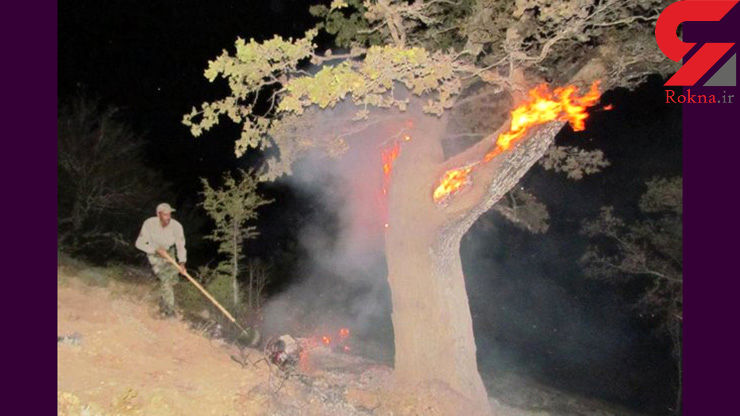 آتش سوزی جنگل عباس آباد مهار شد