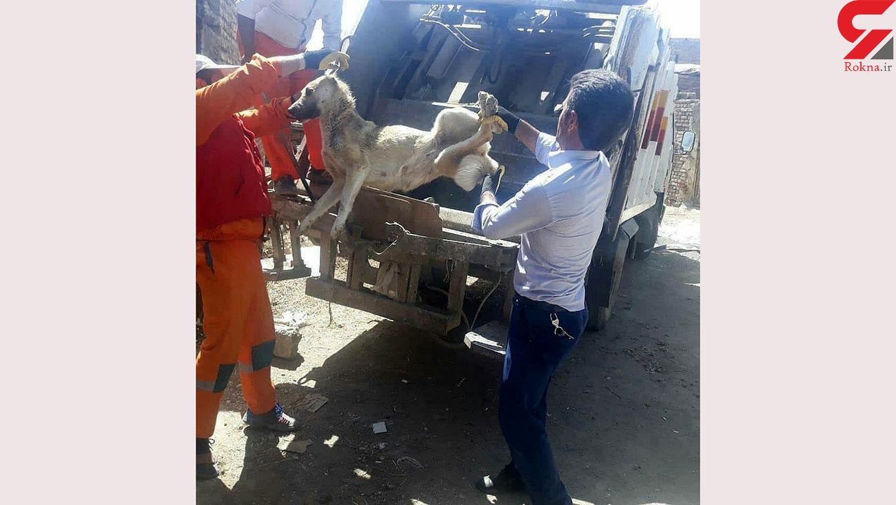 فجیع ترین روش سگ کشی توسط شهرداری سلماس + عکس 16+