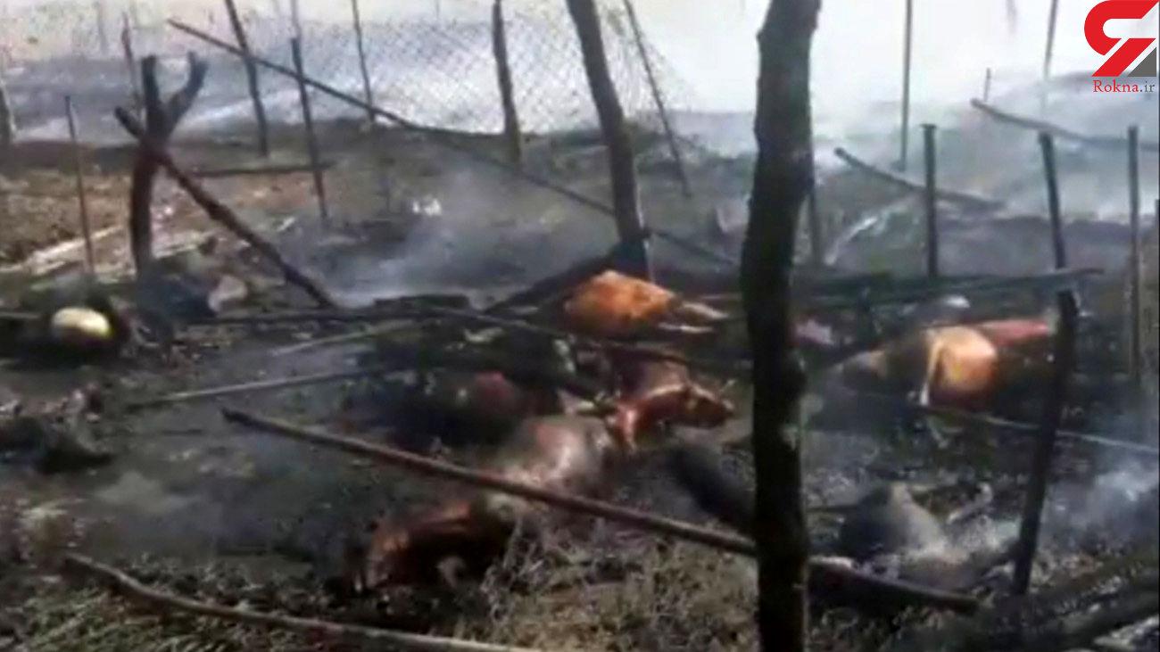 فیلم / آتش سوزی 3 خانواده عشایری را خانه خراب کرد / دار و ندارمان سوخت