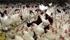 آنفلوآنزا ۲۰۰۰ میلیارد تومان به مرغداران خسارت زد