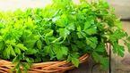 این سبزی معطر از شما در برابر سرطان دفاع می کند!