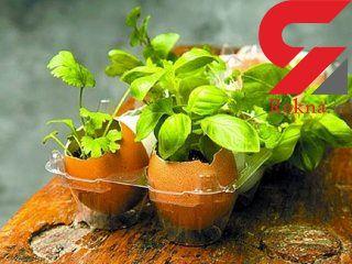 سبز کردن سبزه در پوسته تخم مرغ + آموزش