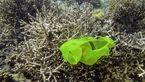 انباشت زباله های پلاستیکی در اقیانوس ها یک خطر جدی زیست محیطی