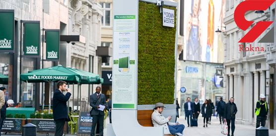 درخت شهری؛ برای مقابله با خستگی روانی