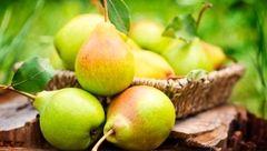 چاقی را با خوردن این میوه ها شکست دهید