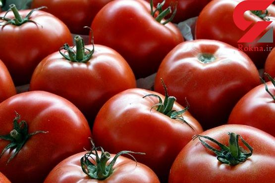 ارزانی گوجهفرنگی در روزهای آینده