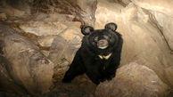 محیط زیست پیگیر مرگ خرس سیاه بلوچی در باغ وحش