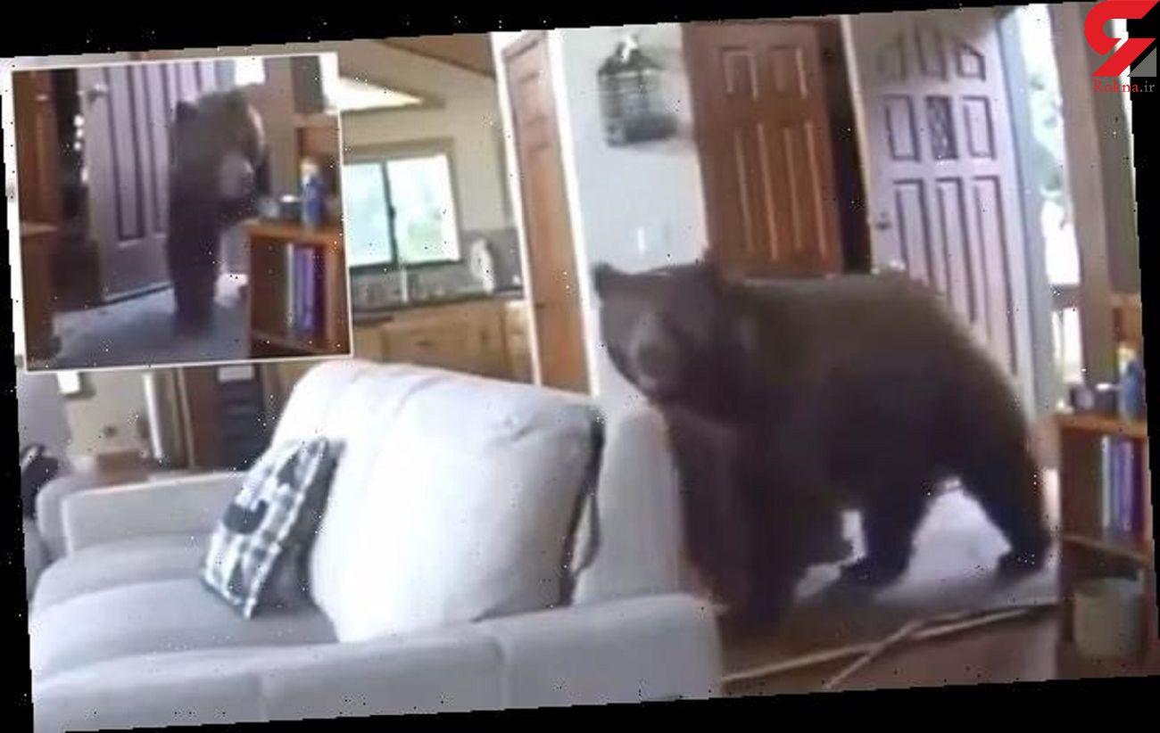 لحظه ورود بامزه خرس غول پیکر به داخل خانه لاکچری! + فیلم / امریکا