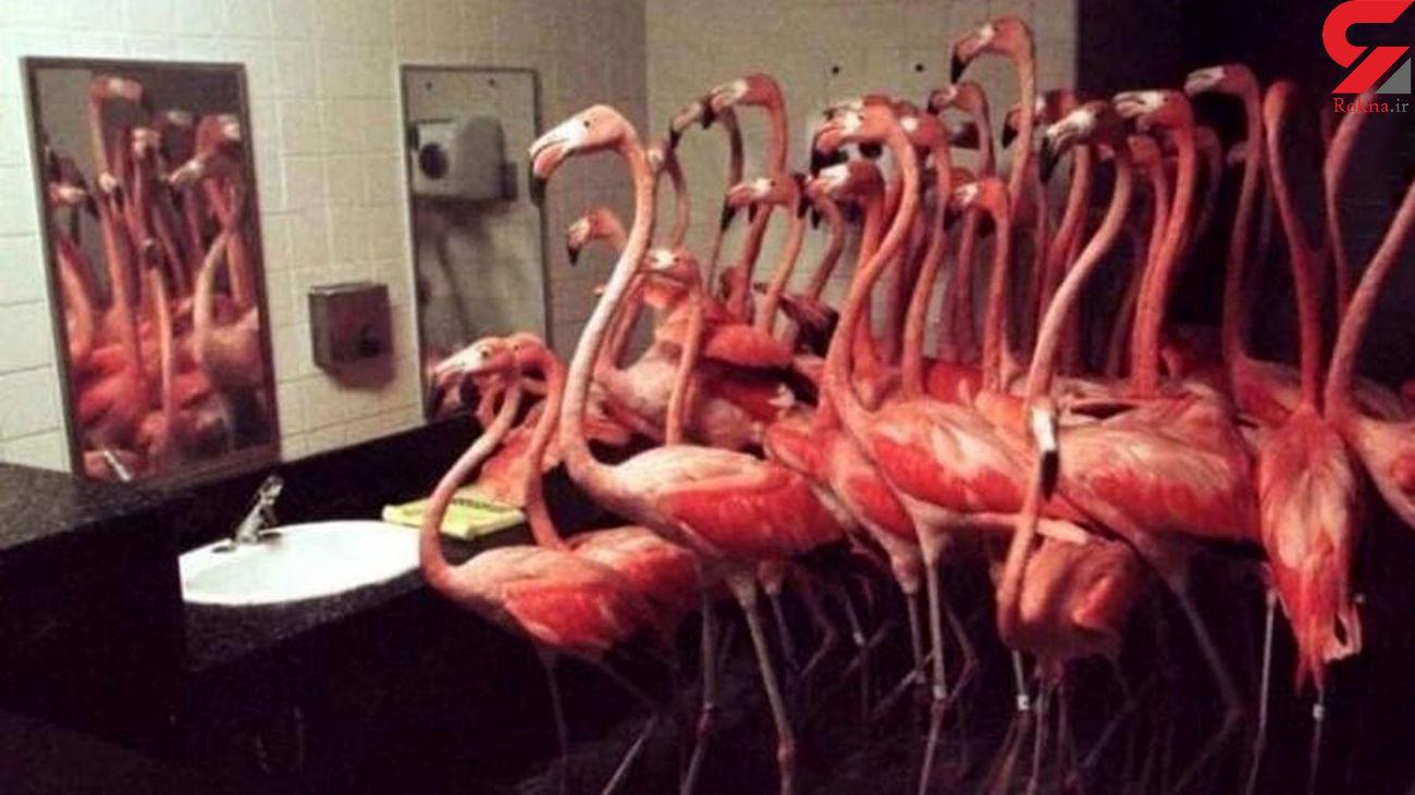 حبس کردن 30 فلامینگو در دستشویی + عکس