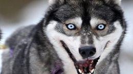 رویارویی یک سگ با رعد و برق + فیلم