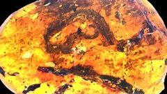 فسیل نطفه یک مار را کشف شد
