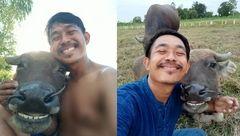 تصاویر جالب از سلفی مرد تایلندی با بوفالوی خندان!