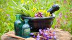 این گیاه سلامت کلیه تان را تضمین می کند