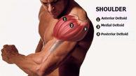 عضلات سرشانه بزرگ چگونه ساخته می شود /  شش راه طلایی در بدنسازی